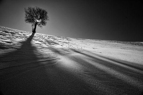 Secular Serenity Desert Tree