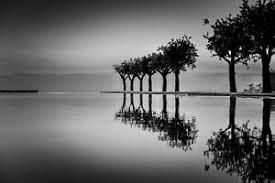 Secular Serenity Calm Trees